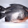 Harga-Ikan-Bawal