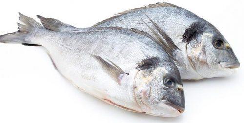 Harga-Ikan-Kakap-Putih-e1526384745389