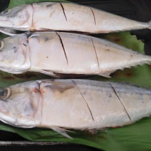 suplier ikan kembung banjar di jakarta