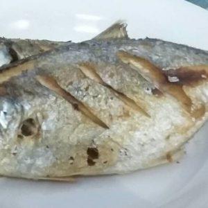 suplier ikan kuwe di jakarta