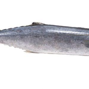 suplier ikan tengiri di jakarta